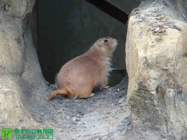 动物园,圆仔,黑尾草原犬鼠,松鼠,木栅动物园