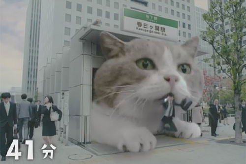 但光是可爱的巨猫就让网友大呼疗愈,相信有养过猫咪的人又更能联想