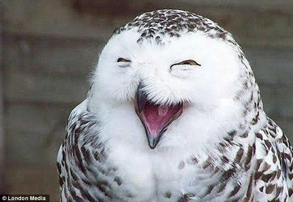【图】得意的笑 古锥的动物 爆笑画面大集合!