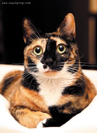 壁纸 动物 狗 狗狗 猫 猫咪 小猫 桌面 400_548 竖版 竖屏 手机