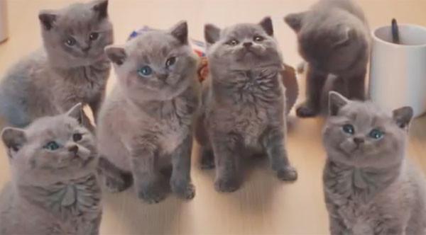 没想到冒出一颗可爱的猫咪头,小灰猫一只接一只爬出来,看得3位女士不