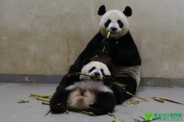 小朋友,参观动物园时,千万不要随便丢东西给动物吃,因为任意餵食的