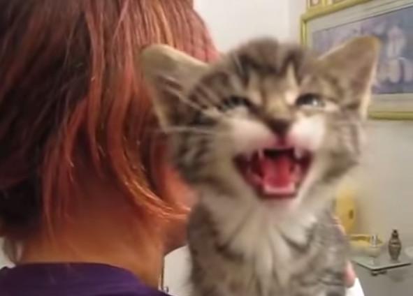 壁纸 动漫 动物 卡通 漫画 猫 猫咪 头像 小猫 桌面 591_424