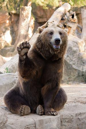 此生可以去一趟!世界8个最特别的动物园