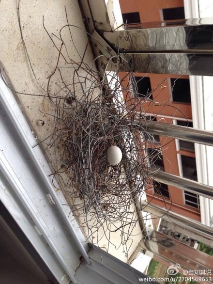 瓜影�_鸟妈妈捡不到树枝,以鐡丝代替… 环保照片真伪惹议