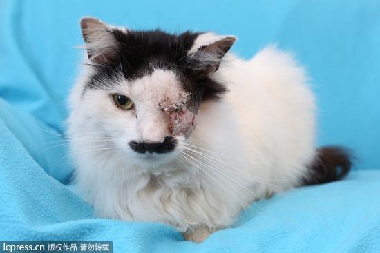 只因长得像「希特勒」 黑白猫惨遭殴打失去左眼