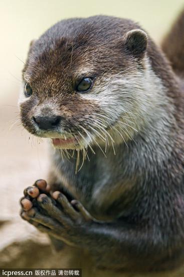 动物双手合十祈祷唯美