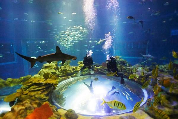 壁纸 海底 海底世界 海洋馆 水族馆 600_401