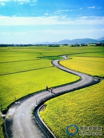 下雨天的稻田风景