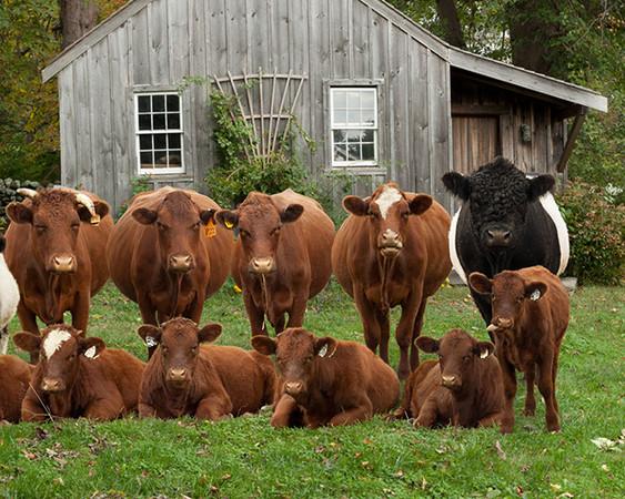 农场动物大合照,我们永远都是一家人