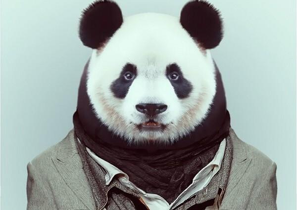 动物的大头照都很可爱,但人的就…….(图