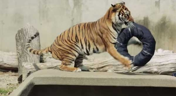 狮子,棕熊也能设计潮裤?日动物园自创「野兽牛仔裤」