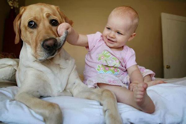对待比它们小的动物或小孩,总是特别温驯轻柔.