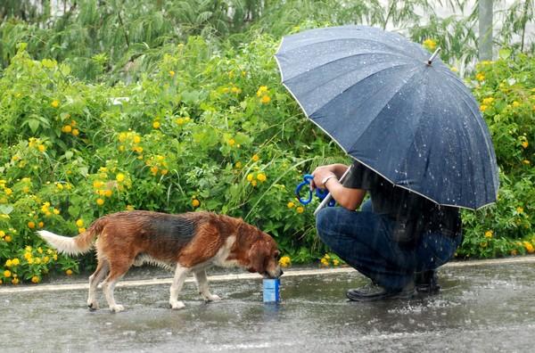 ▼米格鲁犬累得停下脚步,台湾动物紧急救援小组志工拿食物给它吃.