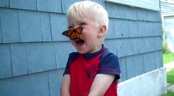 蝴蝶扑脸「亲嘴」打招呼 小男孩可爱反应融化网友