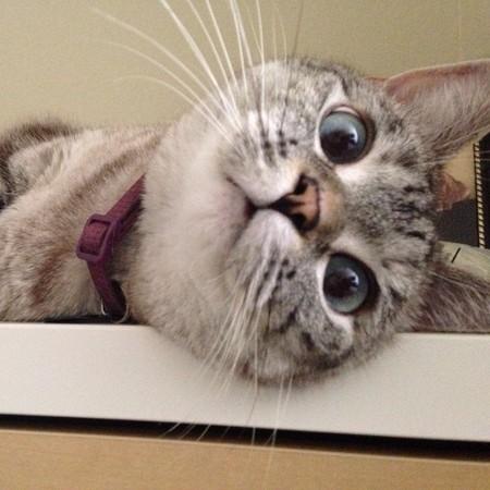 破百万粉丝的「表情猫」娜拉 曾经一个朋友也没有
