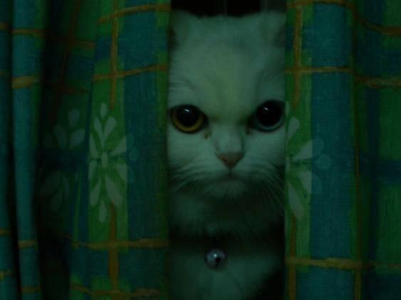 猫咪灵异照博君一「吓」 猫界大法师180°头转夺冠