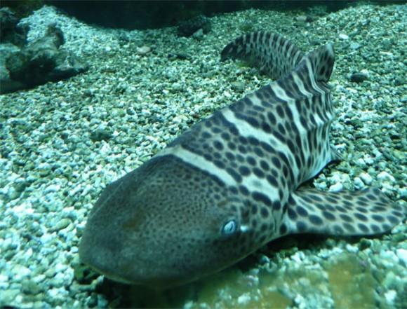壁纸 动物 海底 海底世界 海洋馆 水族馆 鱼 鱼类 580_441