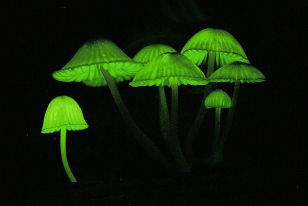 在黑暗森林亮灯指路的,是小精灵吗?