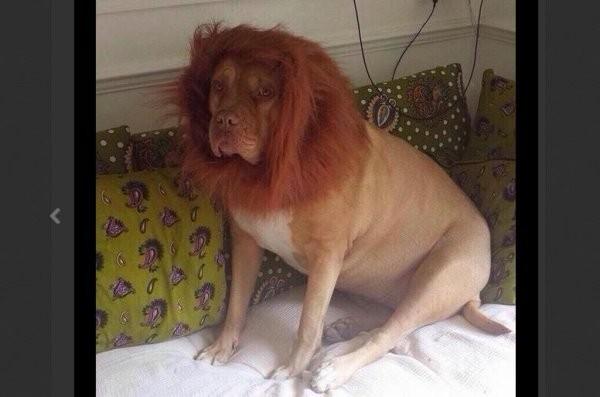 狮子侧脸简笔画