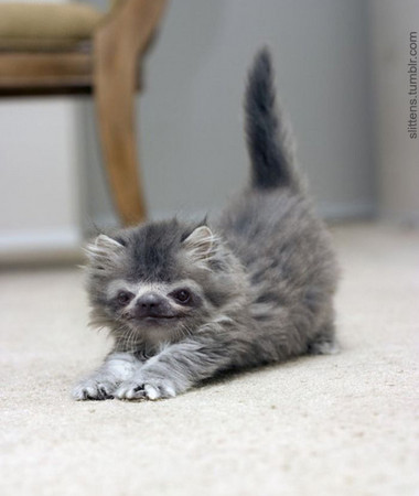 决定痛改前非,暂时不要再写猫的文章, 这世界上还是有很多可爱的动物