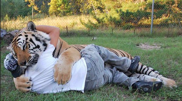 但却长期和14只大型猫科动物生活在一起,包括六只老虎,两头狮子和一只