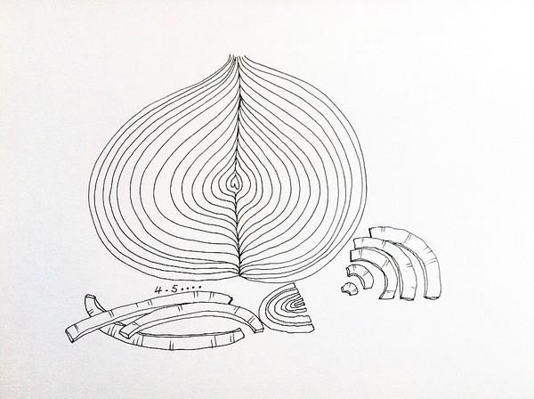 洋葱表面手绘图
