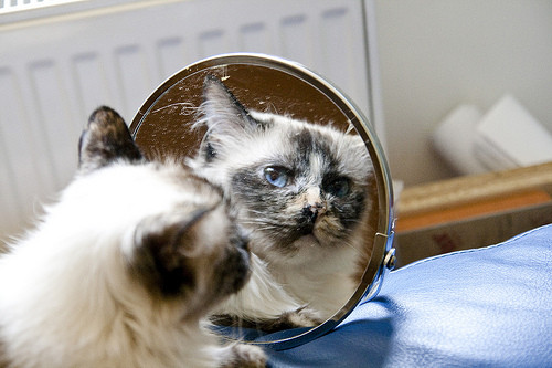 动物从镜中看自己,模样最杀底片是.