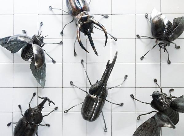 疯狂动物园武士甲虫