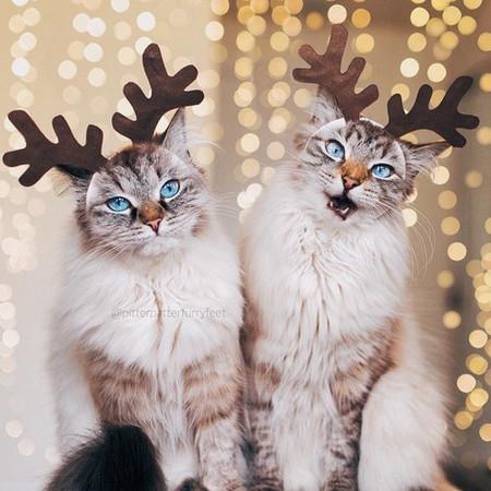 姐姐顽皮,妹妹贪吃!超萌猫猫双胞胎融化你心