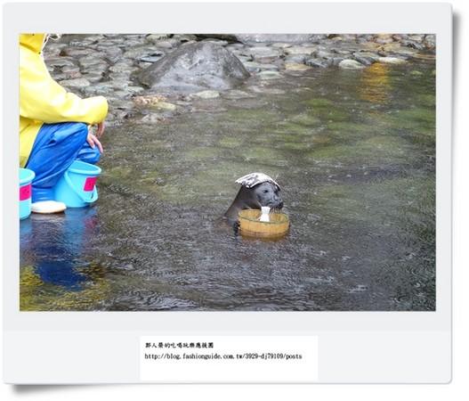 和动物近距离抱抱!日本箱根超可爱动物园,水族馆