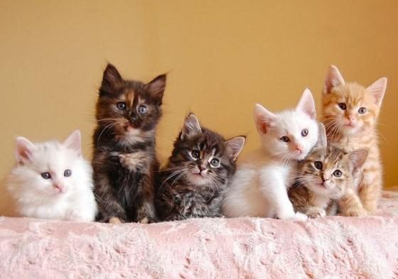 壁纸 动物 猫 猫咪 小猫 桌面 560_393