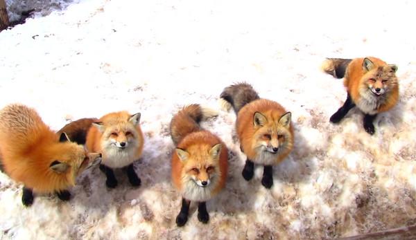 相当多的地方可以看到这些可爱动物!