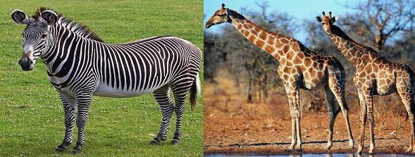 金正恩逛动物园要求引进斑马