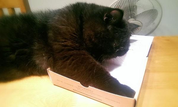 云友徐伟哲家有三只可爱的加菲猫,分别名叫甜甜,蜜蜜与黑糖粿,经常在