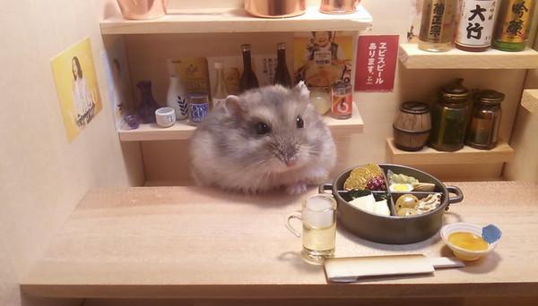 让仓鼠们在里面当店员,可爱模样萌煞广大网友.