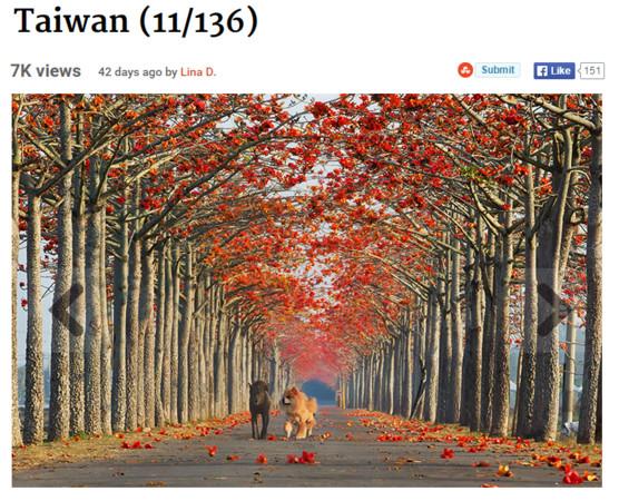 外國網站選出全球最美15條花海街道,台南白河木棉花道成亞洲唯一上榜的地方。(圖/翻攝自BoredPanda網站) 國際中心/綜合報導 外國網站「BoredPanda」整理出世界最美的15條花海街道,其中台灣的木棉花道擠進排行榜中,是上榜的街道中唯一位於亞洲的地方。 BoredPanda選出的15條最美花海街道中,第一名是位於希臘的莫利沃斯(Molyvos),排行第二的街道在德國的波恩(Bonn),亞洲之中唯一上榜的美麗街景則在台灣,台南市白河鎮林初埤木棉花道因火紅的木棉花道綿延好幾公里,引人入勝的風景獲