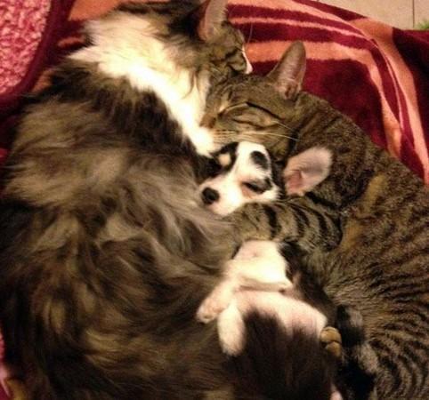 可爱温馨的两只猫咪唯美图片