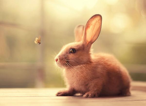 他领养了两只可爱的小兔子,目光深深被可爱的它们所吸引,拿起相机对