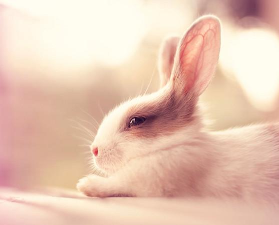 他领养了两只可爱的小兔子