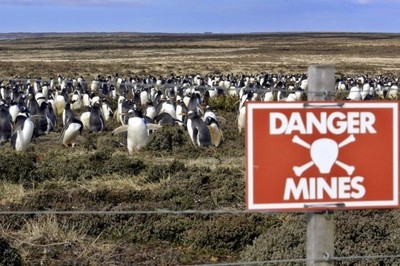 福克蘭群島地雷區,是一群企鵝的家