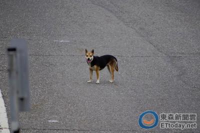 「控肉」被找到時還在哭!陳彥博PO文關注棄養狗狗近況