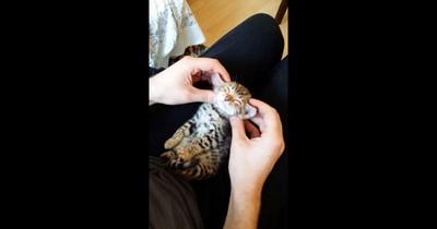 最愛按摩♥小貓被主人馬殺雞爽到瞇眼