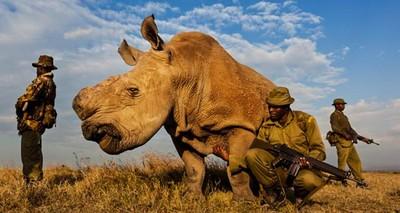 守護最後一隻白犀牛,武裝兵24hr站崗
