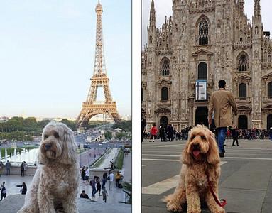 狗都可以遊歷各國,我們還在這耍廢QQ