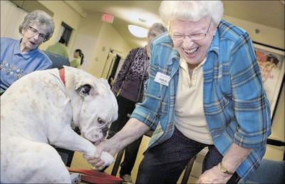 狗醫生出任務!有牠們在就不怕沒笑聲