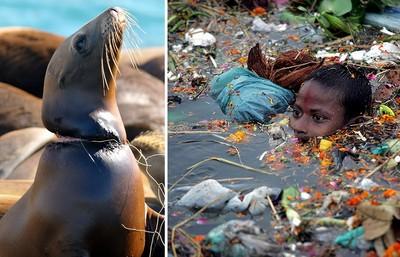 世界被汙染破壞,看見動物絕望的眼神