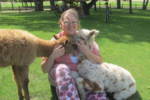 愛牠不用抱牠 草泥馬恐在人類懷裡「氣死」。(圖/A to Z Alpacas )