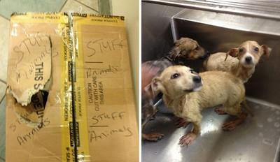 填充娃娃捐物箱,裡面竟關著活生生的小狗