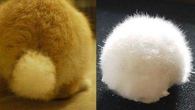 雪白毛絨「兔尾石」,想摸小心受傷呦